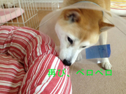 0530高菜_再び.jpg