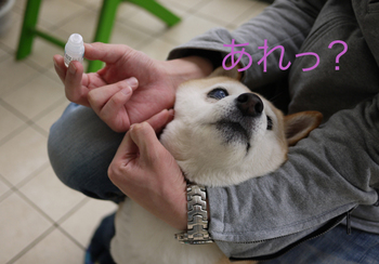 プレトレ5.jpg